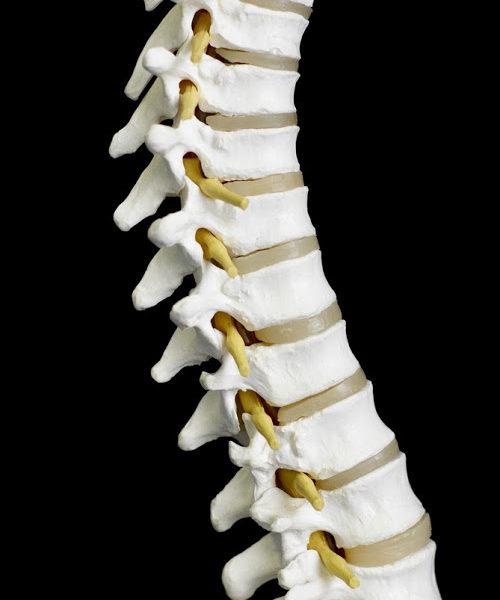 chiropractor st louis